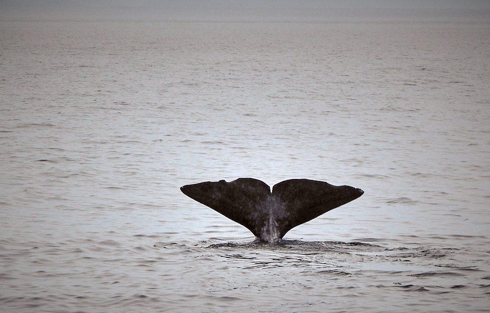Vesterålen – Im Reich der Wale